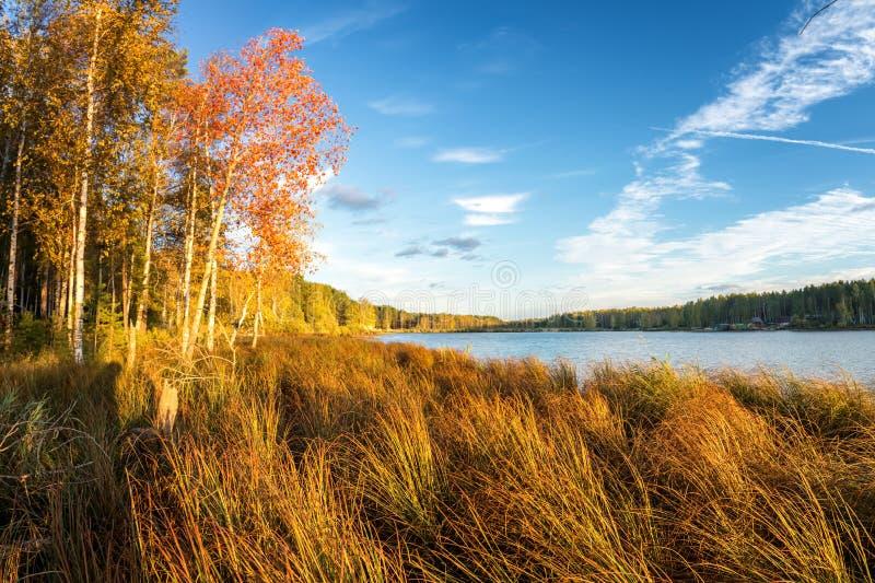 Panorama da paisagem bonita do outono com lago e floresta no banco de Rússia, os Ural imagens de stock