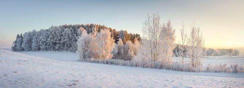 Panorama da paisagem da natureza do inverno Vista panorâmica em árvores gelados no prado nevado na manhã com luz solar amarela mo fotografia de stock royalty free
