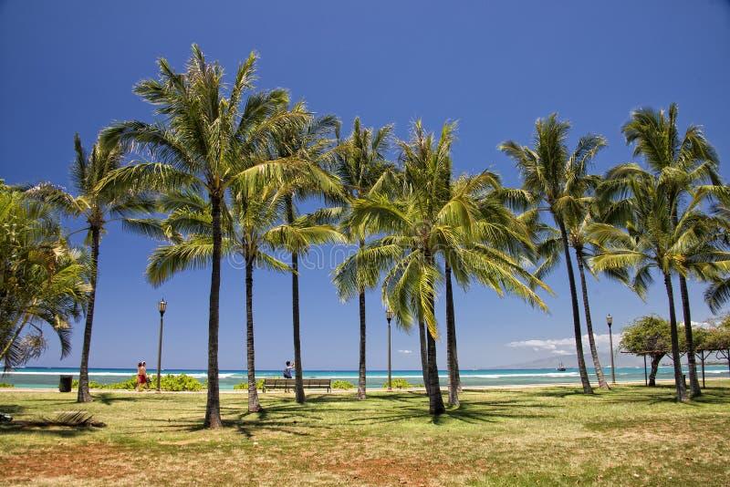 Panorama da praia de Waikiki imagem de stock