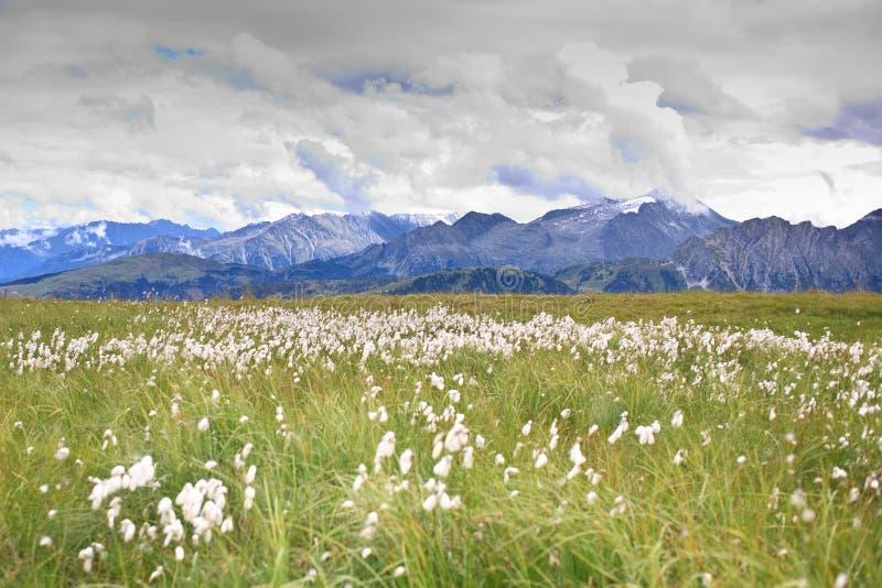 Panorama in de bergen stock foto's