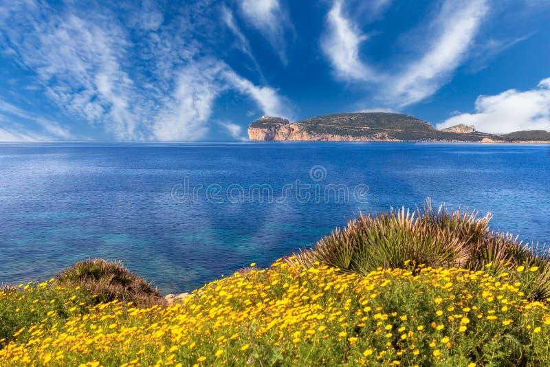 Panorama 02 de Caccia do Capo imagem de stock royalty free