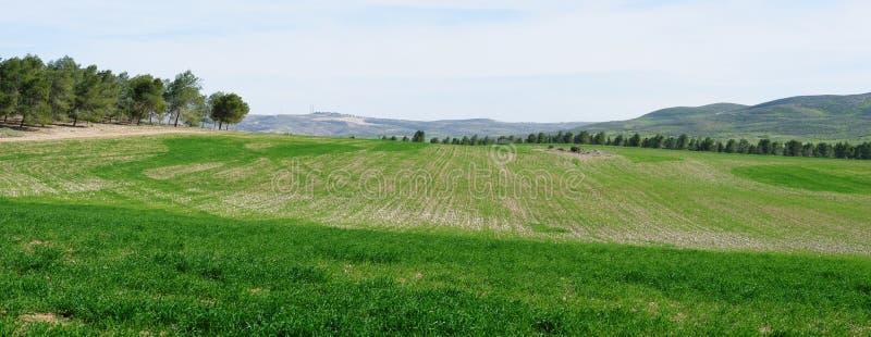 Panorama de campos y de prados verdes en primavera imagen de archivo libre de regalías