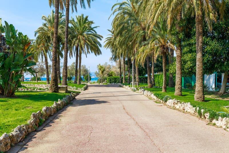 Panorama de Cannes, Cote d'Azur, Francia, Europa del sur Ciudad agradable y centro tur?stico de lujo de riviera francesa Destino  fotos de archivo libres de regalías