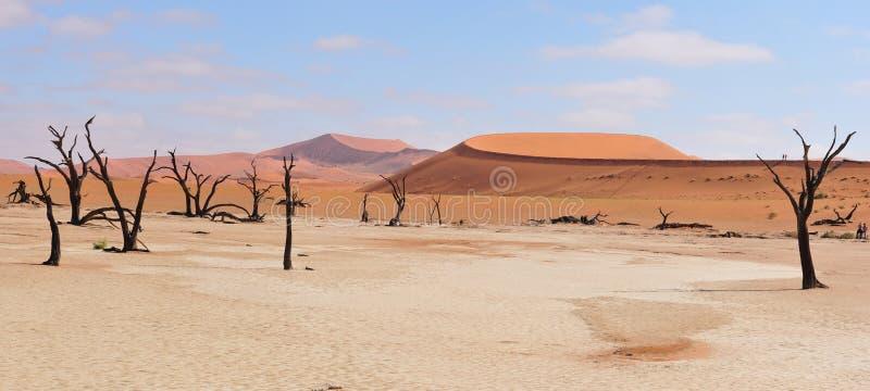 Panorama de Deadvlei imagen de archivo libre de regalías