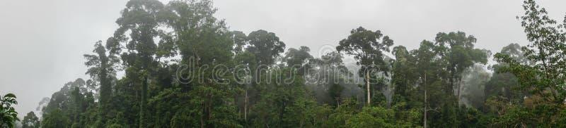 Panorama de Dipterocarp tropical Rainfprest na névoa imagem de stock