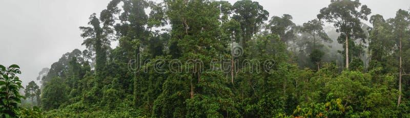 Panorama de Dipterocarp tropical Rainfprest na névoa imagens de stock