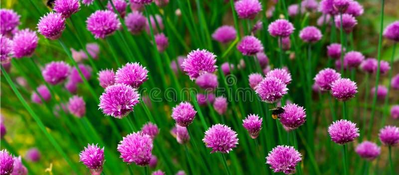 Panorama de fleur photos stock