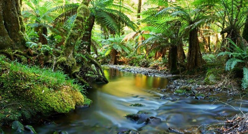 Panorama de fleuve de forêt humide images libres de droits