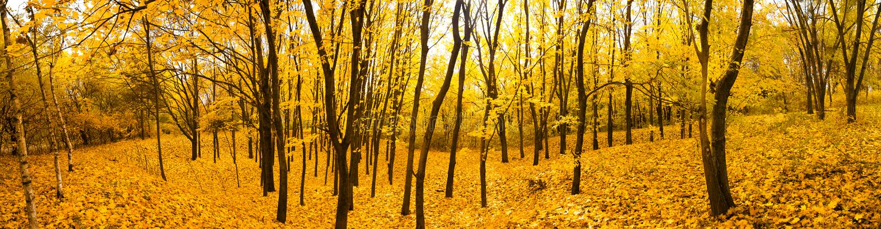 Panorama de forêt d'automne photo libre de droits