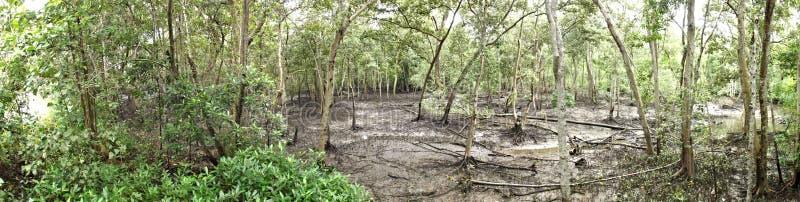 Panorama de forêt de palétuvier à marée basse image libre de droits