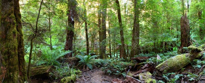 Panorama de forêt humide photographie stock libre de droits