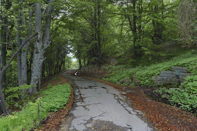 Panorama de forêt pittoresque photo stock