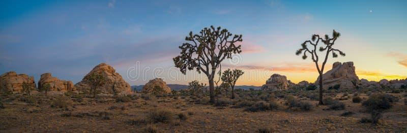 Panorama de Joshua Tree National Park no por do sol fotos de stock royalty free