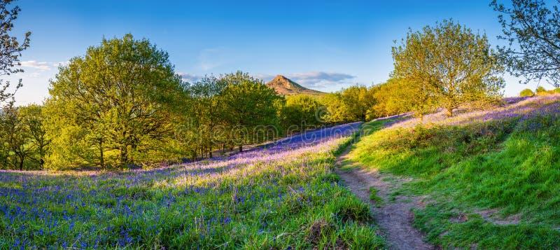 Panorama de l'écrimage de Roseberry de Newton Wood photos libres de droits