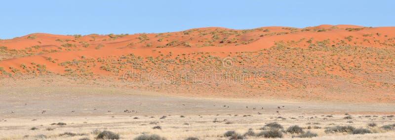 Panorama de la duna y del Oryx del área de Namibrand en Namibia imagenes de archivo