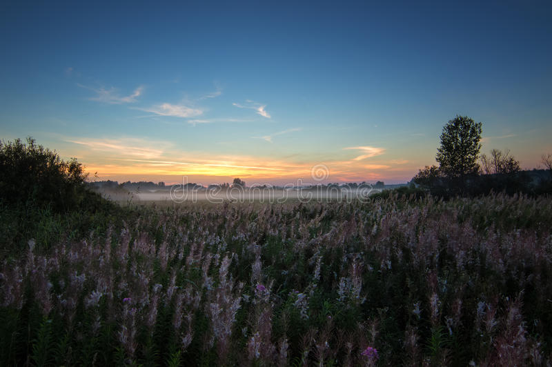Panorama de la mañana brumosa en un campo en verano, Rusia, Ural imagen de archivo libre de regalías