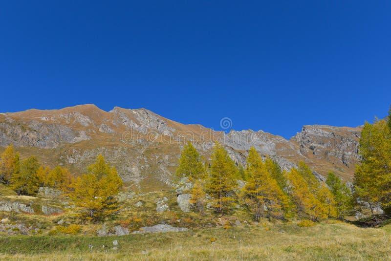 panorama de la montaña, con los abetos y los alerces amarillos y verdes foto de archivo libre de regalías
