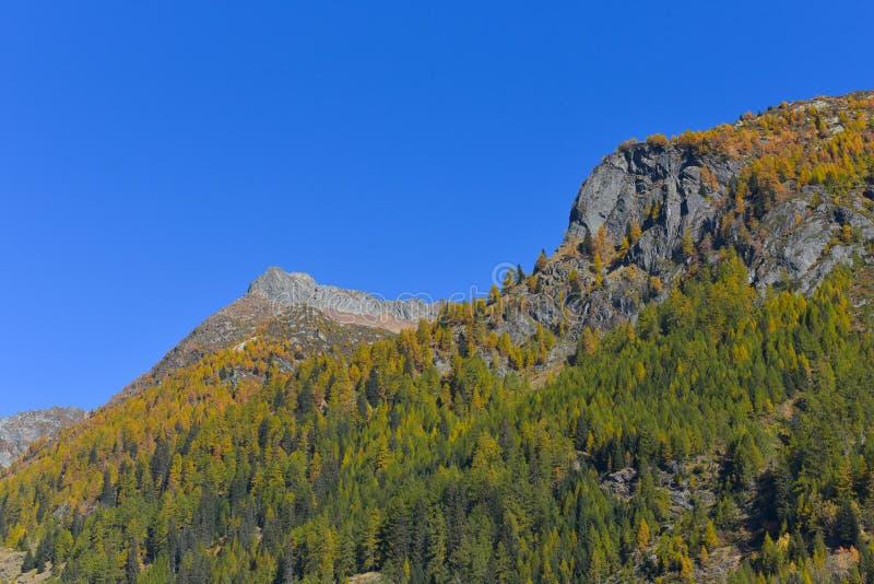Panorama de la montaña, en octubre, con los alerces y los pinos fotografía de archivo
