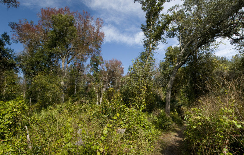 Download Panorama de la naturaleza foto de archivo. Imagen de cielo - 7280726