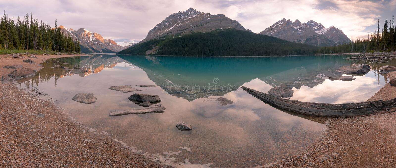 Panorama de la playa del lago Peyto foto de archivo