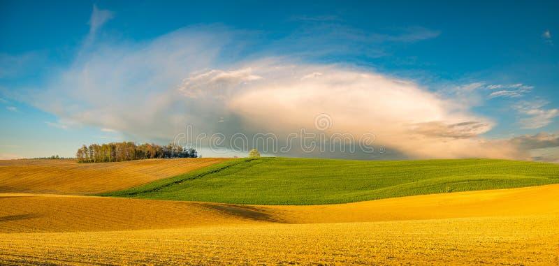 Panorama de la primavera, campo verde fotos de archivo
