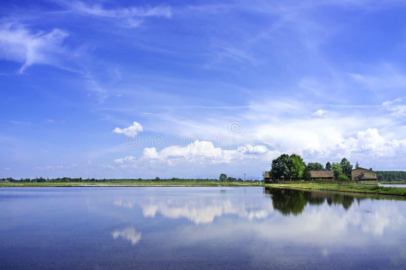 Panorama de la primavera del campo de arroz de Lomellina Imagen del color foto de archivo libre de regalías