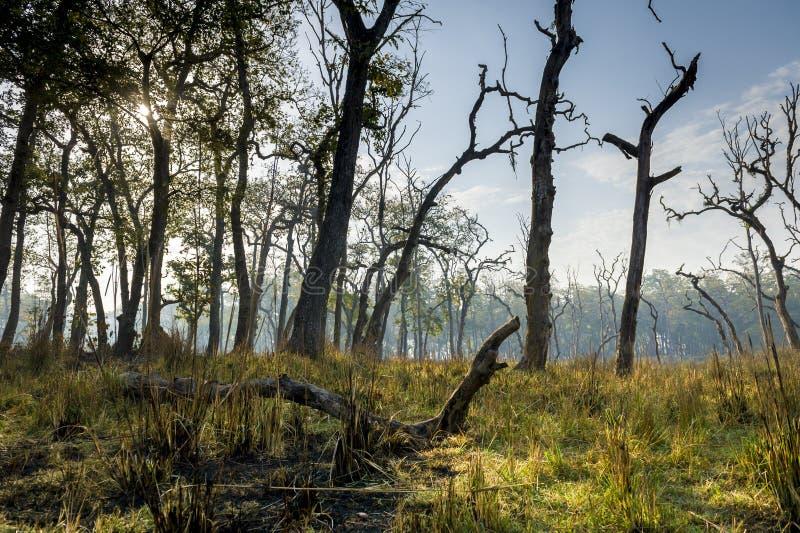 Panorama de la selva de Nepal (Chitwan) imagen de archivo