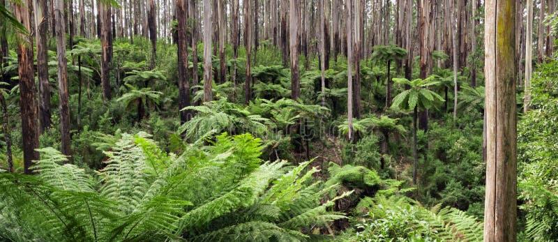 Panorama de la selva tropical fotos de archivo