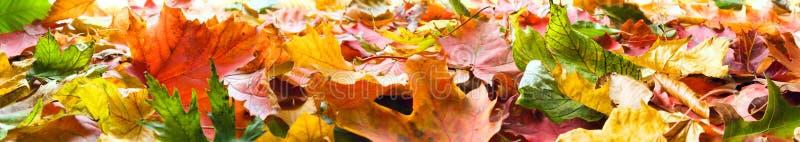 Panorama de las hojas de otoño fotos de archivo libres de regalías