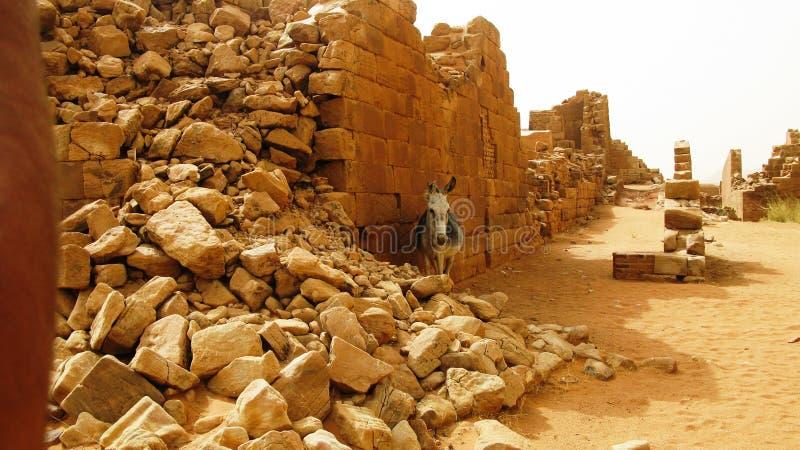 Panorama de las ruinas de Musawwarat es-Sufra con el burro, Meroe, Sudán fotos de archivo libres de regalías