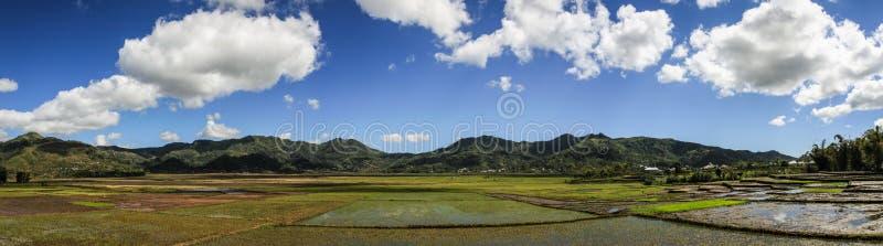 Panorama de los arroces de arroz alrededor de Buon mA Thuot, montañas centrales, Vietnam imagenes de archivo