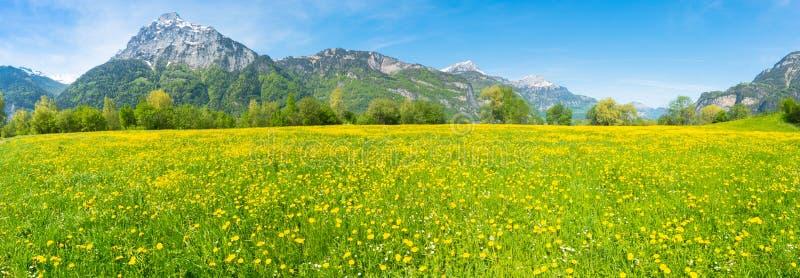 Panorama de los verdes frescos y de los wildflowers del verano imágenes de archivo libres de regalías