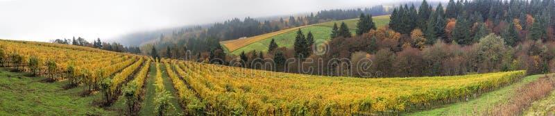 Panorama de los viñedos de Dundee Oregon fotos de archivo