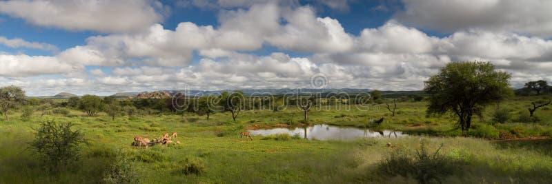 Panorama de um furo de água no savana de Namíbia foto de stock royalty free