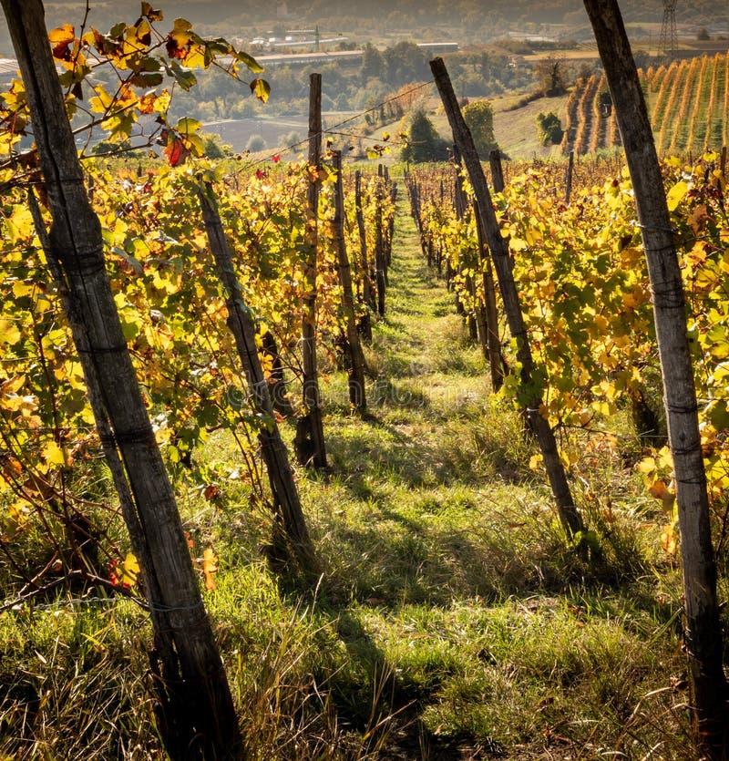 Panorama de um ramo do Monferrato, herança das videiras do Unesco no por do sol, Piedmont, Itália fotografia de stock