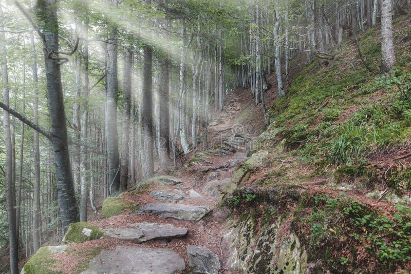Panorama de um trajeto da montanha com raios de sol fotografia de stock