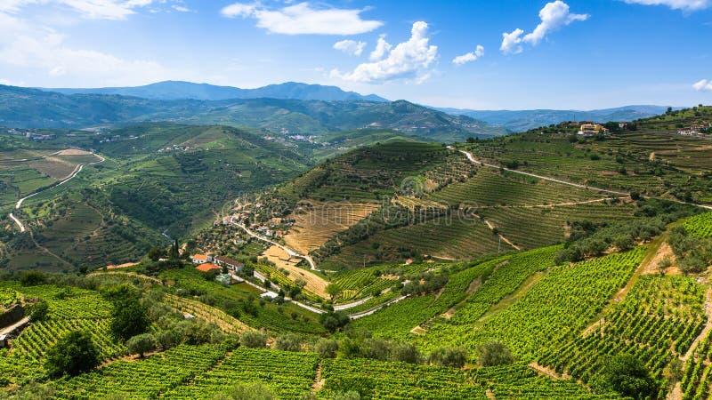Panorama de vallée de Douro, Portugal photographie stock libre de droits