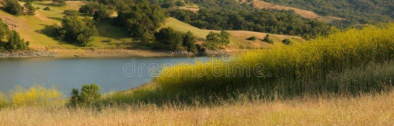 Panorama de zone de moutarde et de prairie de chêne photo libre de droits