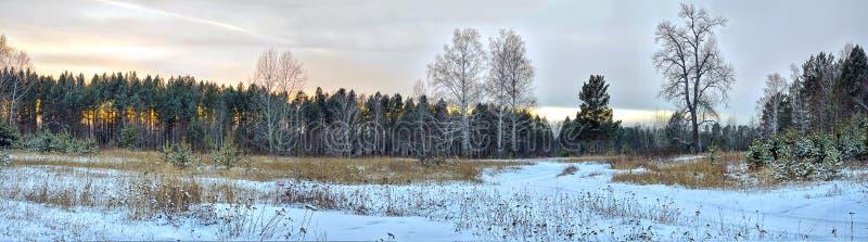Panorama De zonsondergang van de winter in het bos royalty-vrije stock afbeelding