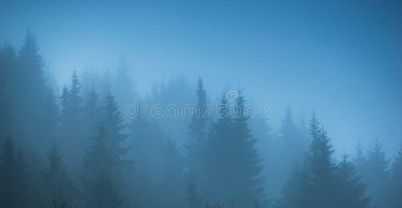 Panorama degli alberi forestali della nebbia immagine stock