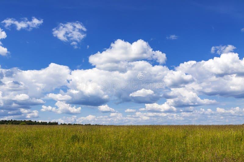 Panorama dei campi di estate su un fondo del naba blu e delle nuvole bianche fotografie stock