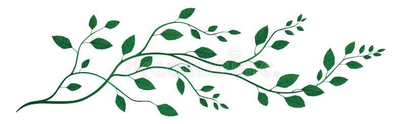 Panorama, dekoracyjny kwiecisty motywu składać się cienki, skręcanie gałąź zakrywać z liśćmi 2d ilustracja obraz stock