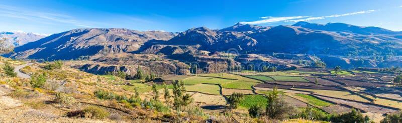 Panorama del barranco de Colca, Perú, Suramérica.  Incas para construir el cultivo de terrazas con la charca y el acantilado. foto de archivo