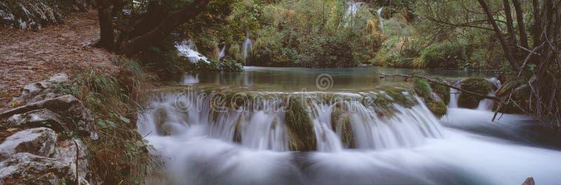 Panorama del bosque imagenes de archivo