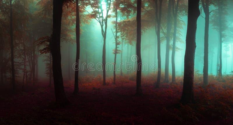 Panorama del bosque de mirada fantasmagórico de niebla del cuento de hadas del bosque en la mañana fotografía de archivo libre de regalías