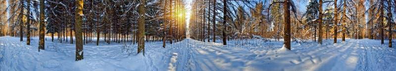 Panorama del bosque del invierno foto de archivo