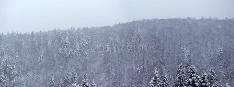 Panorama del bosque del invierno fotos de archivo