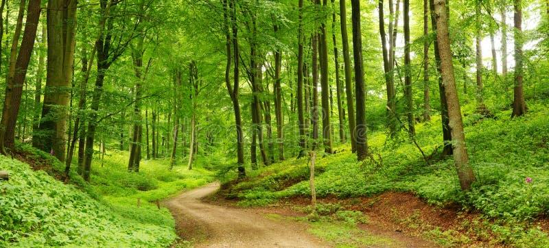 Panorama del camino de bosque foto de archivo libre de regalías