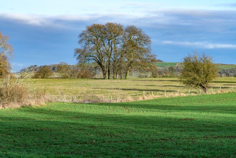 Panorama del campo de Cotswold que mira hacia la colina de Brailes imágenes de archivo libres de regalías