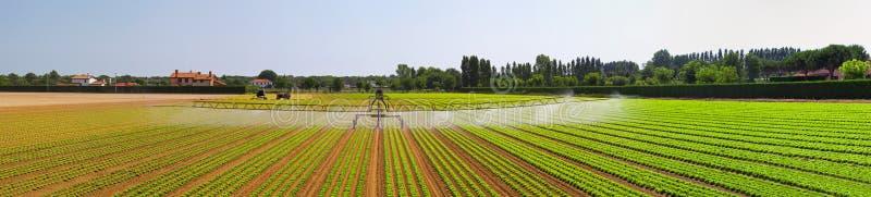 Panorama del campo de la irrigación imagen de archivo libre de regalías